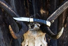 Buck 110 Review – an Essential Folding Knife for Your Hunting Arsenal