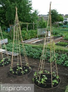 6 Bamboo or Branch Tomato Cages Projects & Videos. Now that's a pretty veggie garden.