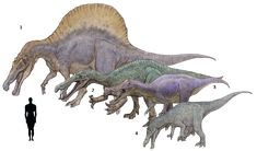 1. Spinosaurus aegyptiacus 2. Suchomimus tenerensis 3. Irritator challengeri 4. Baryonyx walkeri