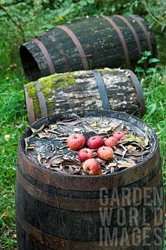 love the moss on the barrels