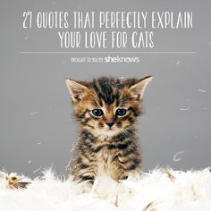 27 Cat quotes for the cat lovers out there
