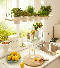 Having plants in your home will improve the air quality of your home and make it look more inviting. [Indoor Plants Potted Plants Indoor Herb Garden Small House Plants Comfortable Home Decor Improving House Comfort Plants In Kitchen Brighten Up Your Home] Kitchen Plants, Kitchen Dining, Herbs In Kitchen, Kitchen Ideas, Herb Garden In Kitchen, Kitchen Cupboard, Kitchen Sink, Cupboard Ideas, Kitchen Shower
