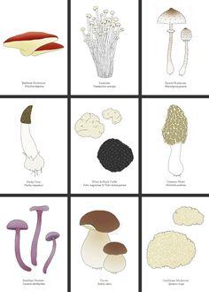 Mushroom Cards illustrated by Johanna Kindvall