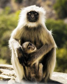 Mother's Protection Photo by Abhishek Chaudhary — National Geographic Your Shot