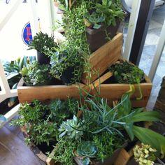 Wine Barrel Succulent Garden