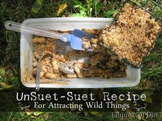 Make your own unsuet-suet to feed wild birds in the winter. Birds need our help surviving during winter months. If you don't make your own suet, it's very inexpensive and can be purchased at most stores.