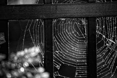~ Wonder Web ~ Image by © Captured By Carrie Photography  http://www.facebook.com/CapturedByCarriePhotography