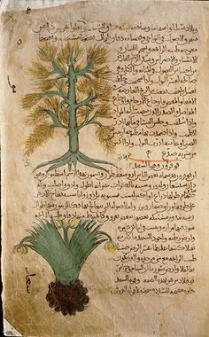Folio 5r of the Arabic version of Dioscorides De Materia Medica