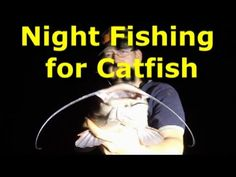 time night fishing for catfish, live and cut gizzard shad. Live shad works for all big catfish, and cut fish is great for blue catfish and channel catfish (though flatheads will hit cut bait too).