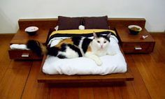 Bed for a cat. Bahahaha. I love this. I need one for my future puppy.