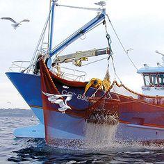 Conserves de poissons Bio certifiées, produits de la mer