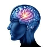 The brain receptor helped regulate metabolic processes that control body weight, and reducing the number of NTR in fat cells prevented weight gain in mice. Behavior Analyst, Social Behavior, Brain Tumor, Brain Injury, Head Injury, Misophonia, Brain Activities, Seizures, Epilepsy