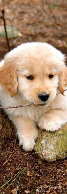 Tiny stick for a tiny puppy <3