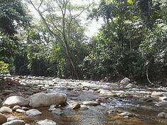 Cordillera Oriental montane forests - Wikipedia Endangered Bird Species, Andean Condor, Spectacled Bear, Habitat Destruction, Natural Ecosystem, Oak Forest, Tree Frogs, Biomes, Sierra Nevada