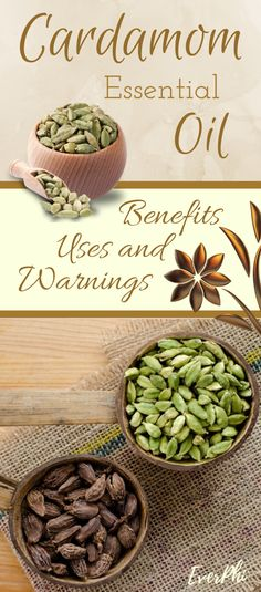 Cardamom Essential Oil Uses and Benefits for Health - EverPhi Cardamom Essential Oil, Helichrysum Essential Oil, Doterra Essential Oils, Essential Oil Blends, Cardamom Benefits, Easential Oils, Mediterranean Diet Recipes, Oil Benefits, Herbalism