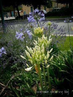 Furighedda gardening