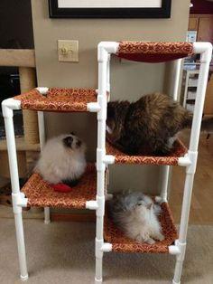 飼っている猫を自由に遊ばせたり、くつろがせたりするなら、ハンモック(ニャンモック)という物を作って与えるとよい。これは猫にとっての癒しのくつろぎの場所になること…
