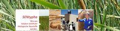 """Im Senegal wächst ein toller Rohstoff für Ökobaustoffe, und keiner traut sich an die Ernte? Doch: Wir! Mit Dir und den Leuten vor Ort. Zahlreiche Studien zeigen: Rohrkolben """"Typha Australis"""" ist ein nachwachsender Rohstoff mit hohem Potenzial. Für di..."""