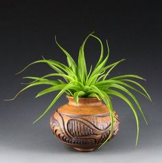 Carved Clay Tilly Pot and Brachycaulos Abita by CarvedClayPottery, $35.00
