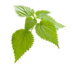 verduras que bajan el acido urico niveles de acido urico alto que tratamiento natural es bueno para el acido urico