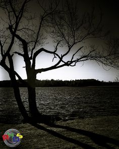 Tree silhouette by Rodney Hickey Design Studio, via Flickr