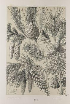 Blumen un Pflanzen, Martin Gerlach | par Bibliothèques de Nancy- Patrimoine