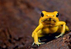Los 5 animales más peligrosos del mundo | Cuidar de tu mascota es facilisimo.com