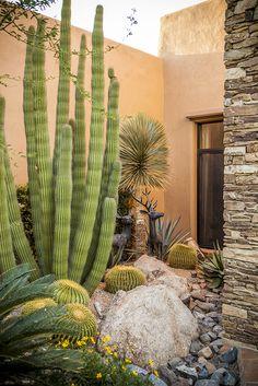 Succulent Landscaping, Front Yard Landscaping, Landscape Design, Garden Design, Xeriscaping, Dry Garden, Desert Plants, Cacti And Succulents, Outdoor Gardens