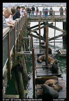 Visitors observing Sea Lions in harbor. Newport, Oregon, USA
