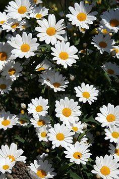 Flower Background Wallpaper, Flower Phone Wallpaper, Sunflower Wallpaper, Nature Wallpaper, Pretty Phone Backgrounds, Tumblr Backgrounds, Flower Backgrounds, Wallpaper Backgrounds, Flowers Nature