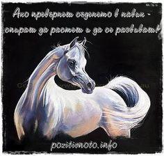 Позитивното - храна за душата: Не бързай с изводите - приказка за белия кон и съдбата