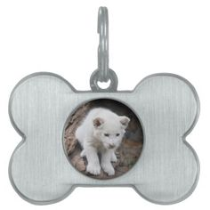 A cute baby white lion cat pet tag
