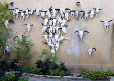 This is neat! Skull Garden at the Gage Hotel in Marathon, TX (West Texas)