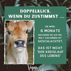 """Vegan Was Sonst 🌱 on Instagram: """"Am Ende des Tages sind wir es, die dafür bezahlen💰 ⠀ ⠀ Auch wenn wir es nicht selbst tun - mit jedem Euro den wir ausgeben, bezahlen wir…"""" Horses, Animals, Instagram, Cycle Of Life, Animales, Animaux, Animal, Animais, Horse"""