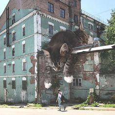 Andrey Scherbak is ingenious director of the Moscow promoting company and in his spare time he likes to photoshop massive cats in his pictures. Double Exposition, Huge Cat, Giant Cat, Photo Chat, Amazing Street Art, Awesome Art, Ghibli Movies, Photoshop, Album Photo