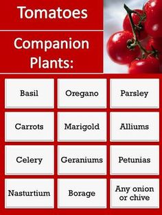 Companion plants for tomatoes.. repel pests, beneficial to garden.  Keep this on file, plus plan now for spring.  - Garden Ideas