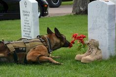 Always Remember ....... At Fort Logan National Cemetery .......MPC Lando and the flowers . David Michael Sonka .