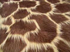 Giraffe textuur: Je kan het zien en voelen...