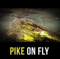 Pike on!