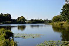Jezioro Gocławskie schowane pomiędzy blokami Pragi Południe