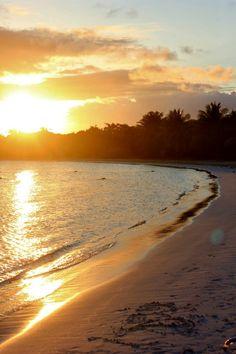 Hi Sugarplum   Island of Vieques,  Puerto Rico