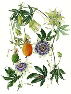 1003 Passion Flower Bits