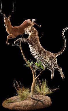 Leopard – Pose #68 Image  gazelle  taxidermy