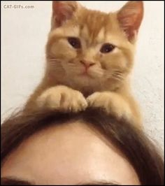 Animated CAT GIF • New Cat hat. Funny Cat kneading on girl head
