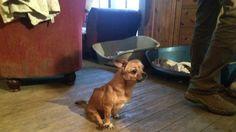 Please sign the Petition.   Ihnen droht die Einschläferung, ein möglicher Beschluss seitens des Veterinäramtes muss verhindert werden. Bitte unterstützt uns durch das Zeichnen dieser Petition, um das Schlimmste für diese Tiere verhindern zu können. Danke! Wir appelieren an das zuständige Veterinäramt: Bitte erkennen Sie an,dass die behinderten Hunde sehr wohl Lebensqualität haben und kein Grund für einen Beschluss zur Einschläferung dieser Tiere besteht. Wir bitten Sie Ihre Einschätzung…