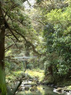 Forest around the bridge, Whangarei