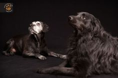 The process of finding a shelter animal a permanent home is often difficult, and for black dogs it's even harder. After photographer Fred Levy Black Dog Syndrome, Fred, Pet Photographer, Modern Metropolis, Photo Series, Book Photography, Dog Owners, Black Backgrounds, Animal Rescue