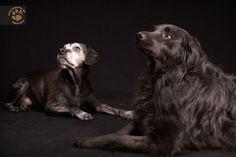 Cei mai frumosi caini negri, de Freed Levy