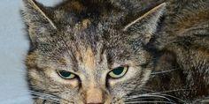 """Lodi: uccise una gatta a fucilate, condannato in appello. LAV: """"Intolleranza diventa reato"""""""