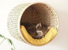 Fin katteseng, kunn laget av en rund kurv ,eksempel fra IKEA. Og et enkelt teppe.